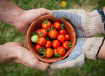 Know your suppliers: Modern slavery in tomato supply chains
